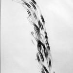 2002 Cola de Caballo Fusain sur Ingres Dimension réelle : 65 x 50 cm.