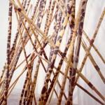 La forêt qui marche. 1983. Bambous peints.